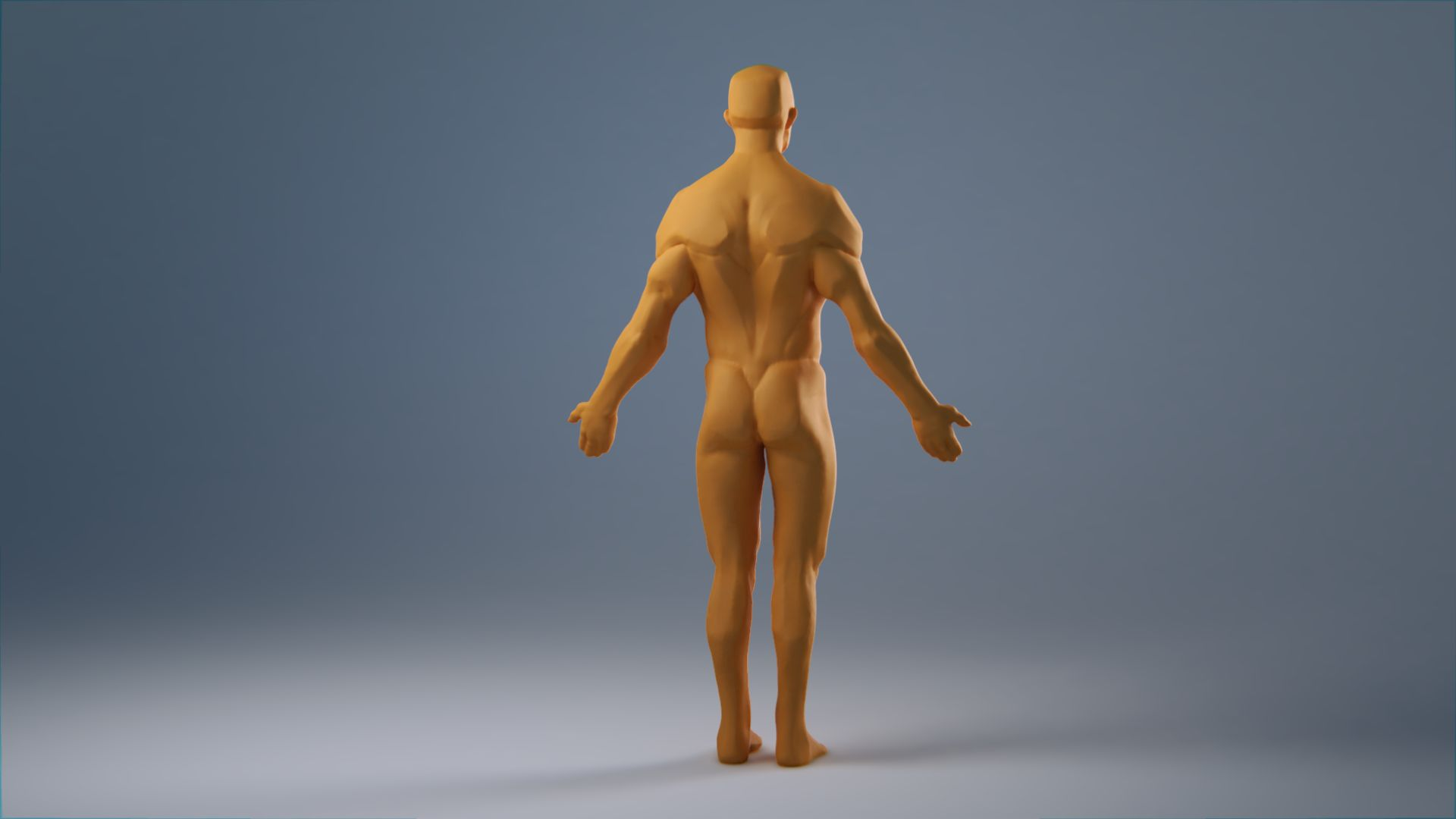 anatomy_wip_0049